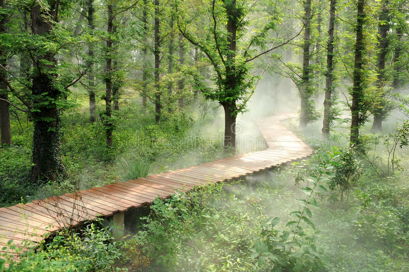 Download Morning fog forest stock photo. Image of fairyland, background - 15248808