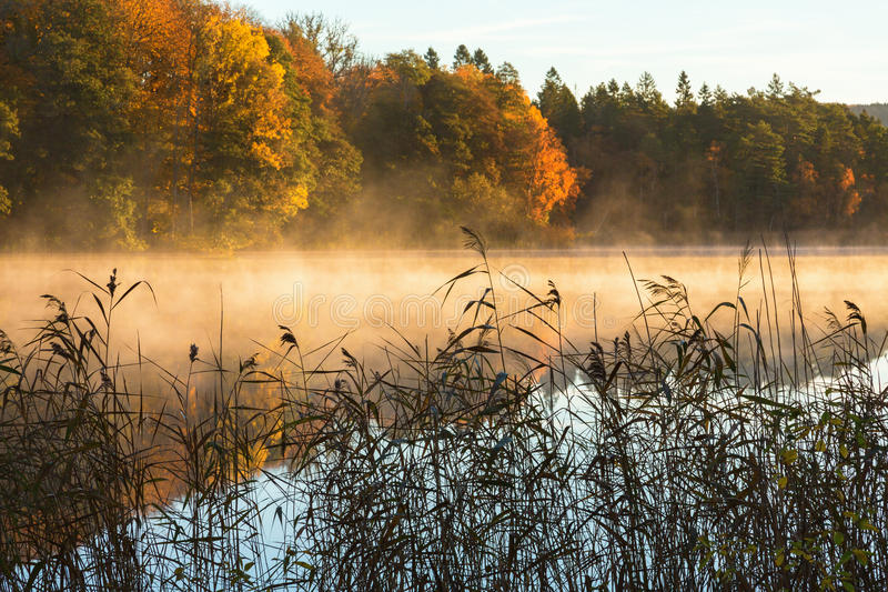 Morning fog by the lake royalty free stock photo