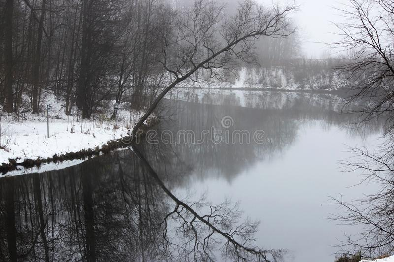 morning fog. a lone tree bent on the shore of the Silver Lake, Gatchina Park. royalty free stock photos