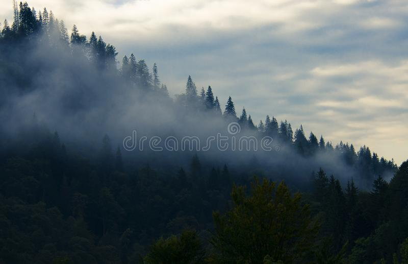 Morning fog in the mountains against the background of ancient snout forest. And sky with clouds, tree, pine, foggy, shadow, misty, woods, dark, fantasy, fall royalty free stock photos