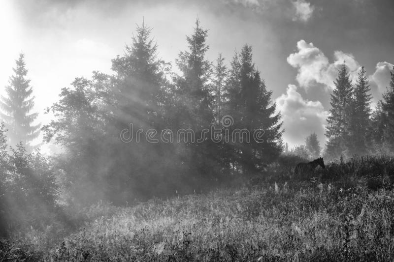 Morning fog in the mountains. Horses graze in a meadow in the Carpathian Mountains, Ukraine stock image