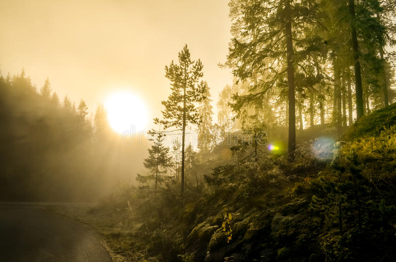 Morning fog in norwegian fjord and wood landscape stock photo