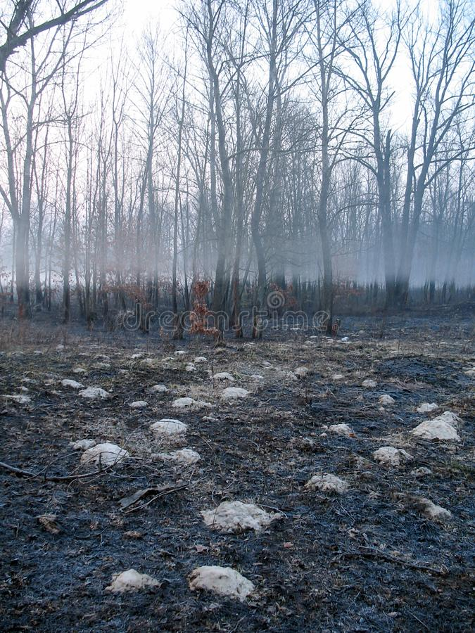 Morning fog strip in the bare dark forest with ash. Landscape of morning fog in the bare dark forest stock images