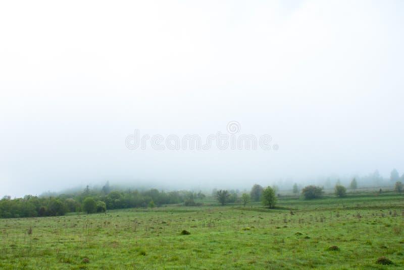 Morning fog. Trees in the fog. Foggy weather. Bad visibility. Morning fog. Trees in the fog. Foggy weather. Bad visibility stock photo