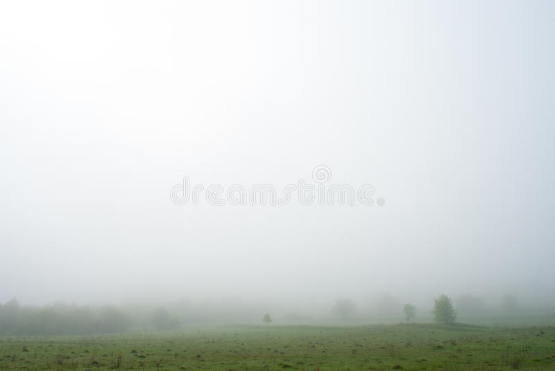 Morning fog. Trees in the fog. Foggy weather. Bad visibility. Silent Hill stock photo
