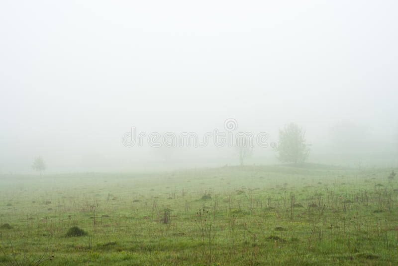 Morning fog. Trees in the fog. Foggy weather. Bad visibility. Silent Hill stock images
