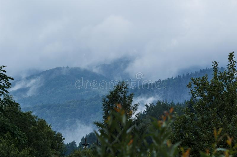Morning fog in the woods royalty free stock image