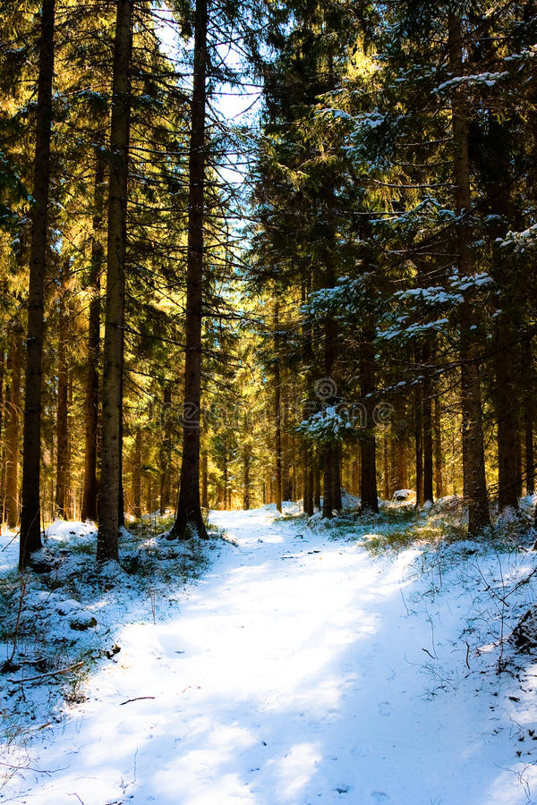 Morning forest stock image