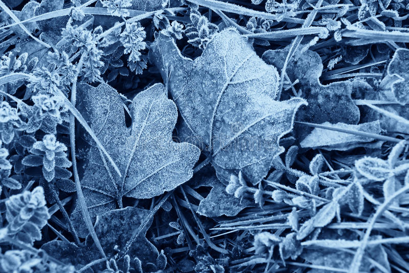 Morning frost stock photography