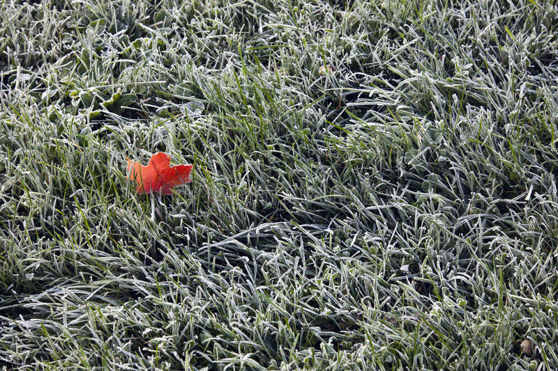 Download Morning Frost Stock Photography - Image: 27987952