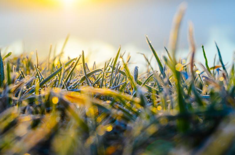 Frost on green grass. Morning frost on green grass in the rays of the rising sun close-up selective focusing stock photography