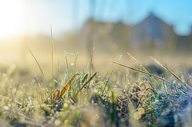 Frost on green grass. Morning frost on green grass in the rays of the rising sun close-up selective focusing royalty free stock image