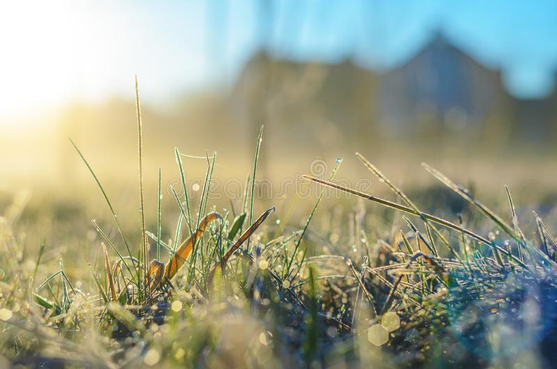 Frost on green grass. Morning frost on green grass in the rays of the rising sun close-up selective focusing stock images