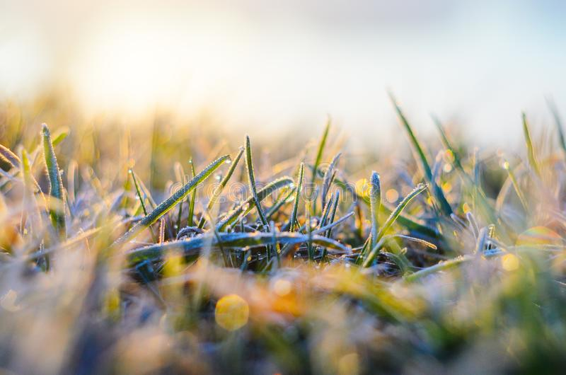 Frost on green grass. Morning frost on green grass in the rays of the rising sun close-up selective focusing royalty free stock photos