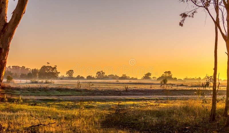 Morning glory stock photography