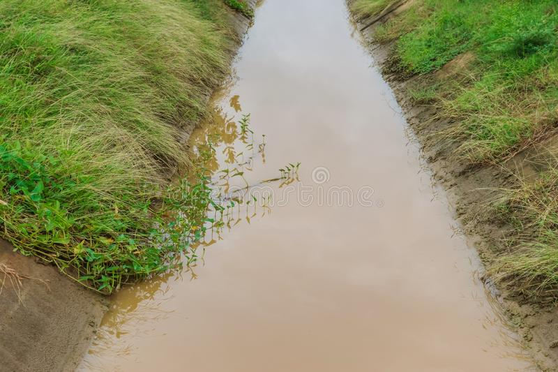 Morning glory that grows simultaneously with grass in irrigation canals. For agriculture stock photography