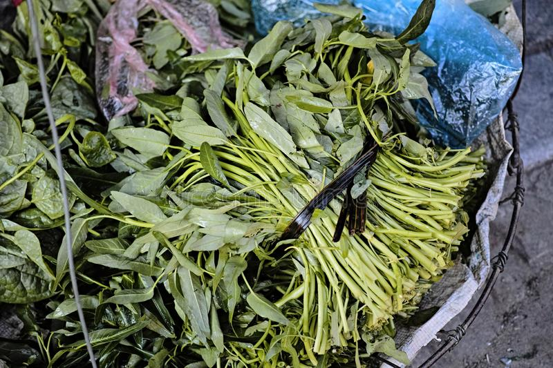 Morning Glory Vegetable at old quarter in Hanoi stock images