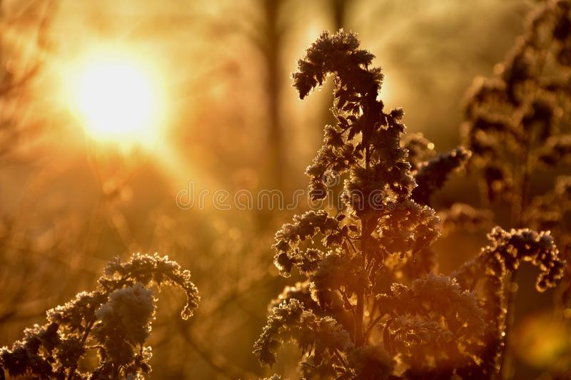Morning gold stock images