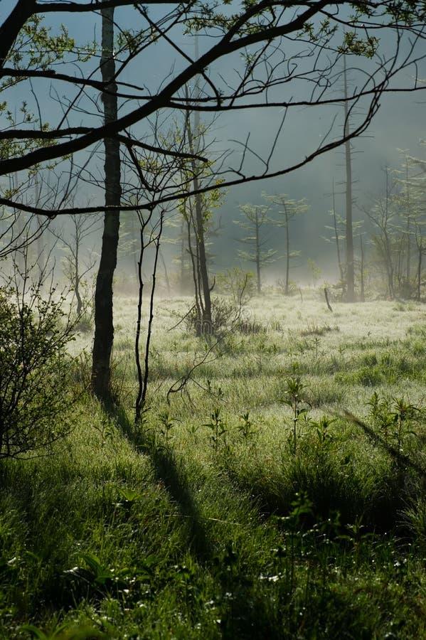 Morning Haze Of Tashiro Wetland Royalty Free Stock Photo
