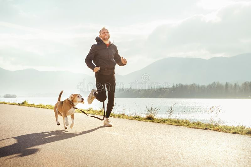 Morning jogging with pet: man runs together with his beagle dog stock images
