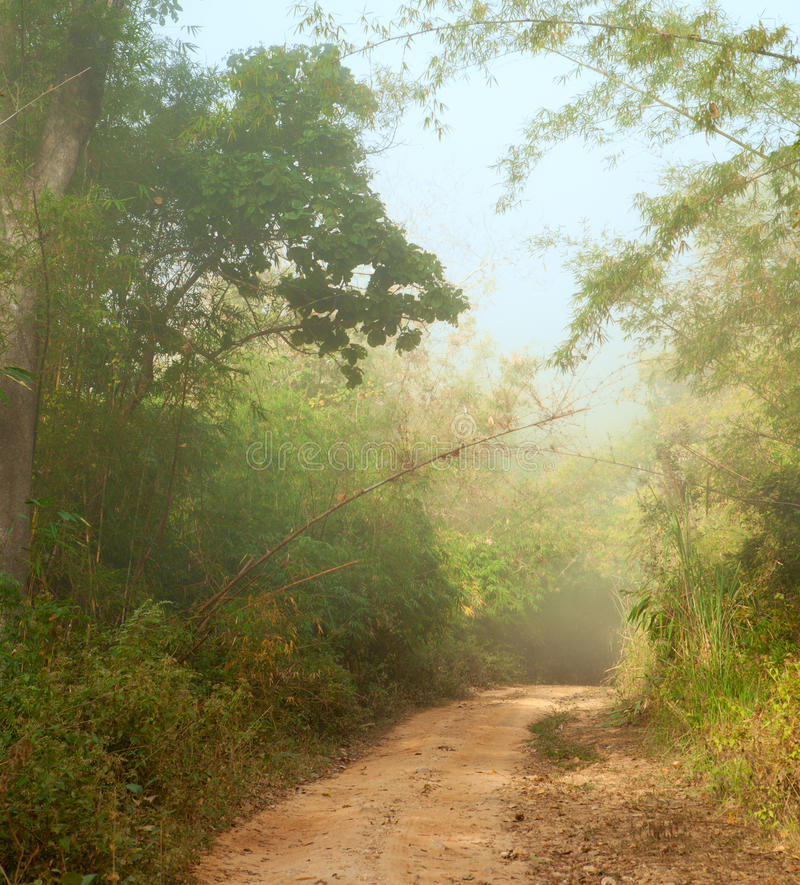 Morning in jungle royalty free stock photos