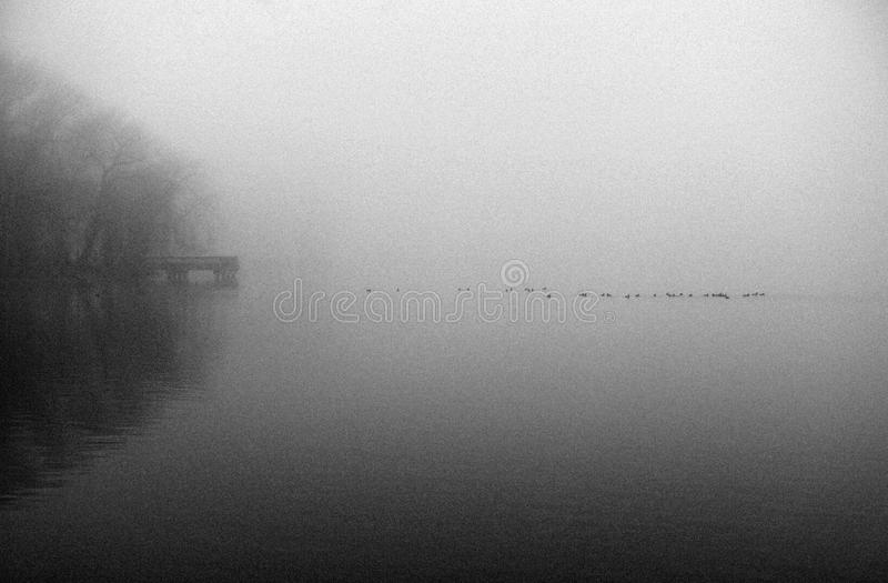 Download Morning on the Lake stock photo. Image of mist, overcast - 23722874