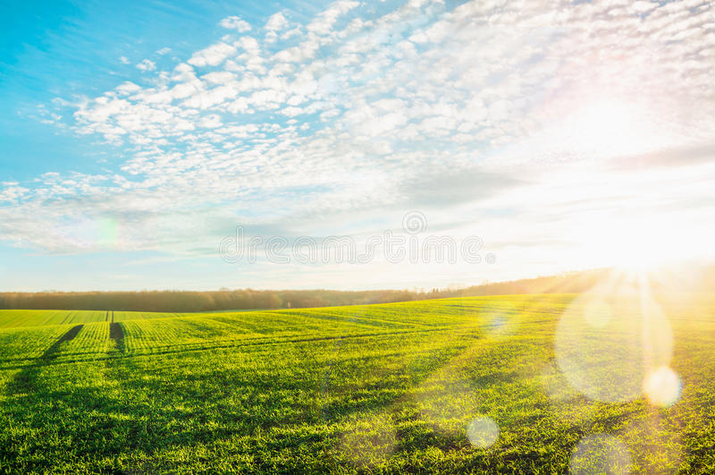Morning landscape with green field, traces of tractor in sun rays stock image
