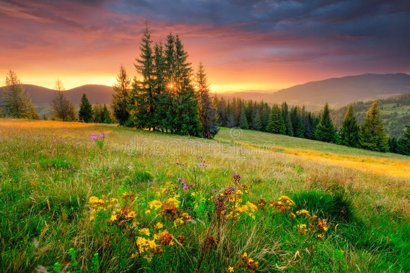 Morning landscape. Green meadow and colorful sky at the sunrise. royalty free stock photography