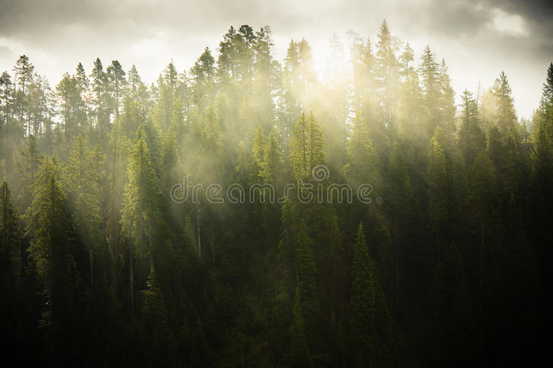 Download Morning Light stock image. Image of forest, green, sunlight - 21495463