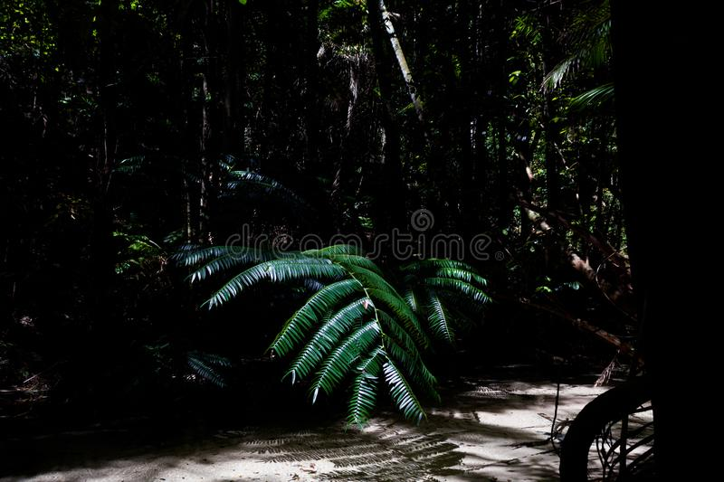 Morning light in beautiful jungle garden, sun is shining right on palm leaves, fraser island, australia. Morning light in beautiful jungle garden australia stock image