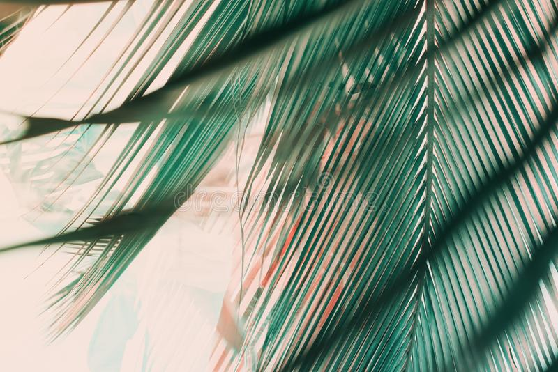 Morning light falls through palm leaf. Exotic tropical stock image