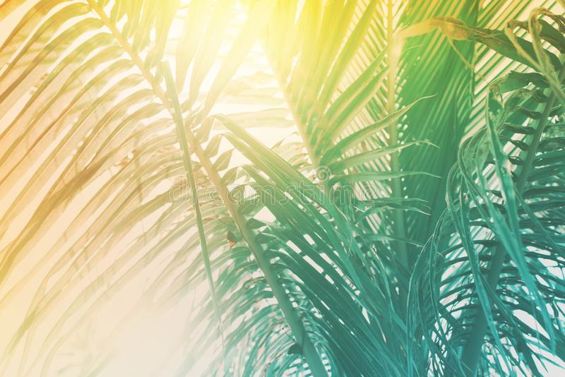 Morning light falls through palm leaf. Exotic tropical royalty free stock image