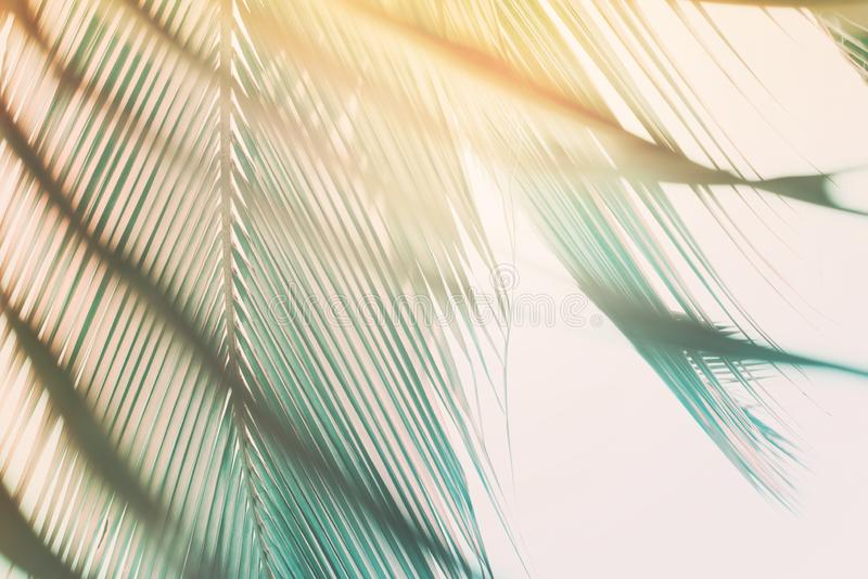 Morning light falls through palm leaf. Exotic tropical stock photo