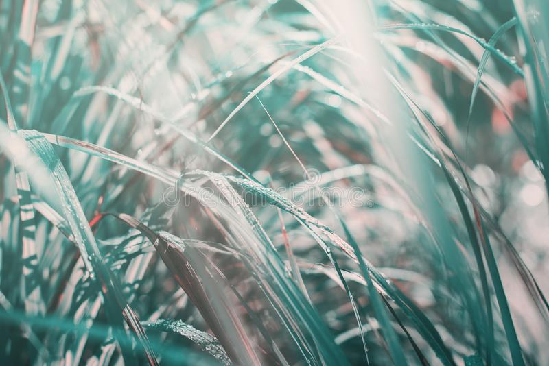 Morning light falls through palm leaf. Exotic tropical stock images