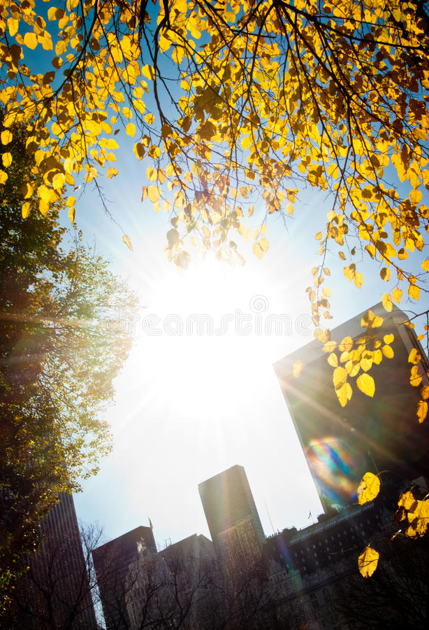 Free Morning Light In The City Park Royalty Free Stock Photo - 19813955