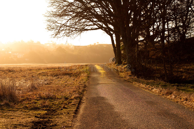 Morning light royalty free stock images