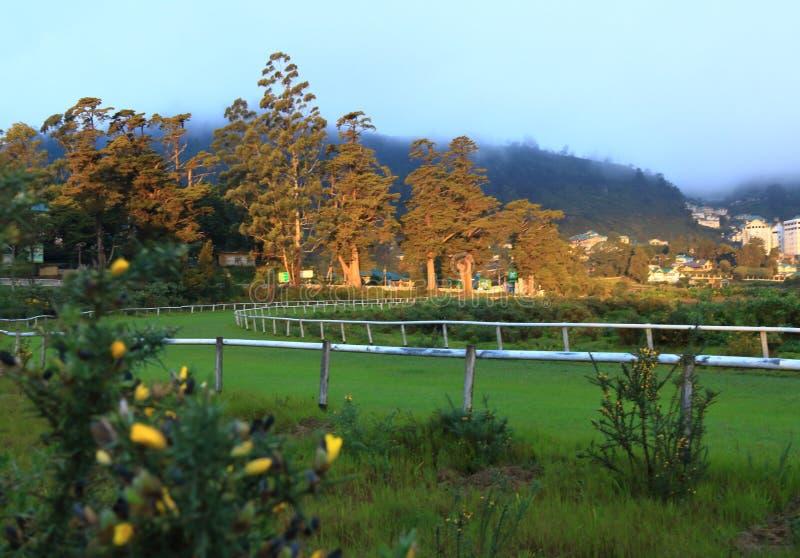 Morning light on trees stock image