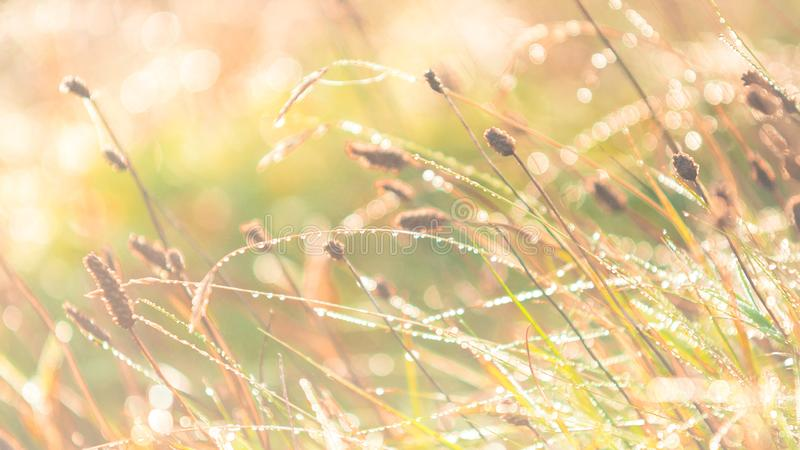 Morning meadow - fresh grass, raindrops, spider webs, sunlight background, nature background royalty free stock photography