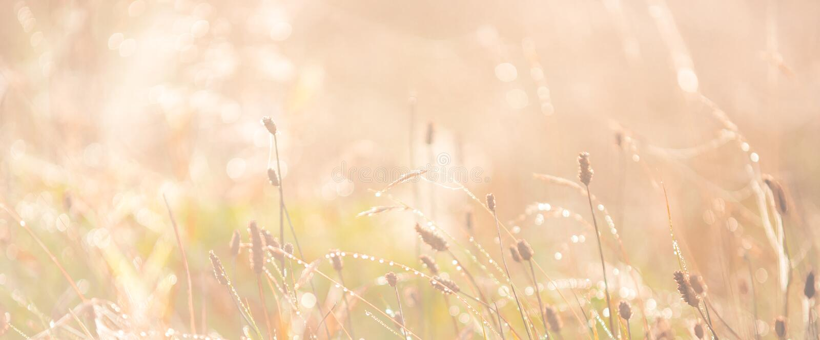 Morning meadow - fresh grass, raindrops, spider webs, sunlight background, nature background stock photos