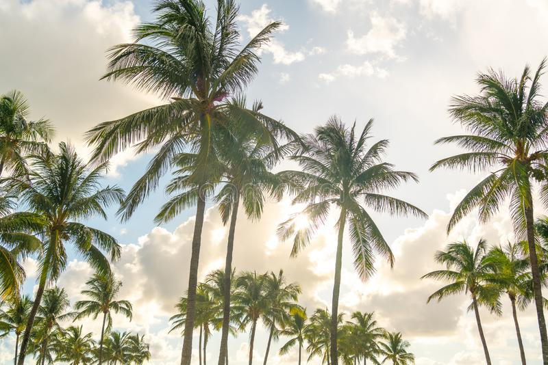 Morning in Miami south beach. Palm trees with sunlight on background. Morning in Miami south beach. Palm trees with sunlight on a background royalty free stock images