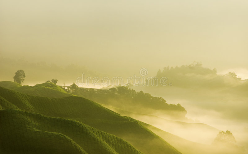 Morning mist royalty free stock photos
