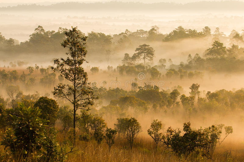 Download Morning Mist Cover Tree And Mountain Stock Photo - Image of majestic, mountain: 37087658