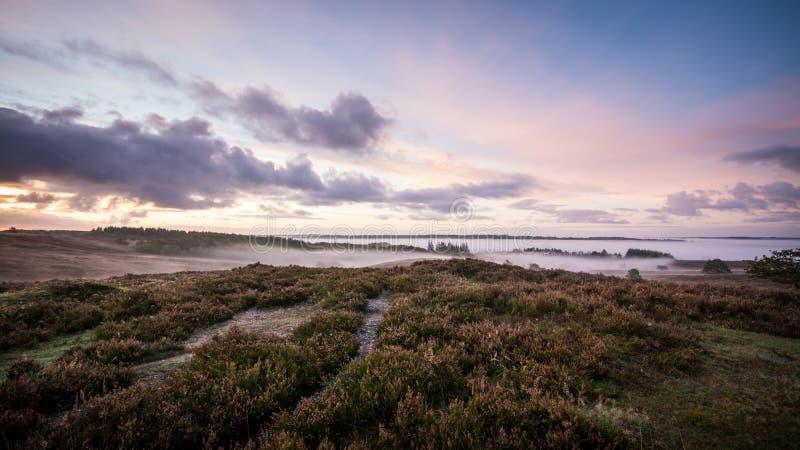 Morning mist in denmark royalty free stock photo