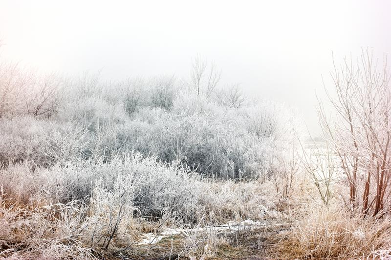 Morning mist fog and hoarfrost - hoar on tree and bush, winter landscape royalty free stock image