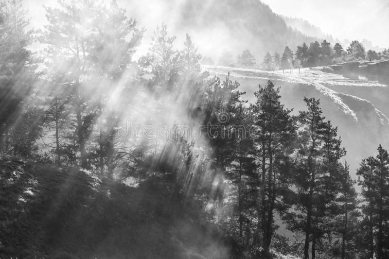 Morning mist in the forest, sun rays breaking through the fog, Georgia, Tusheti stock images