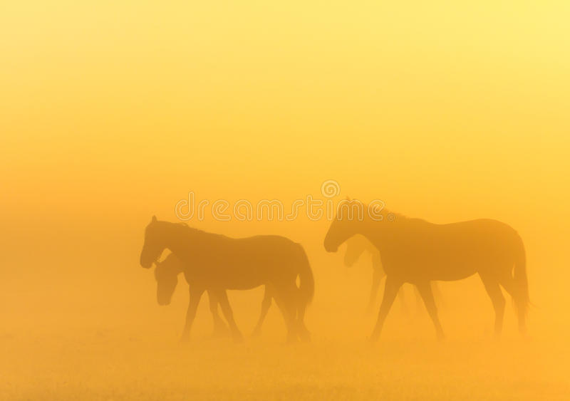 Morning Mist With Horses Royalty Free Stock Photography