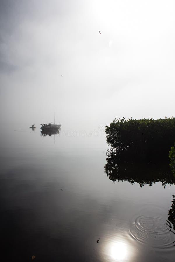 Morning Mist Manatee River royalty free stock photo