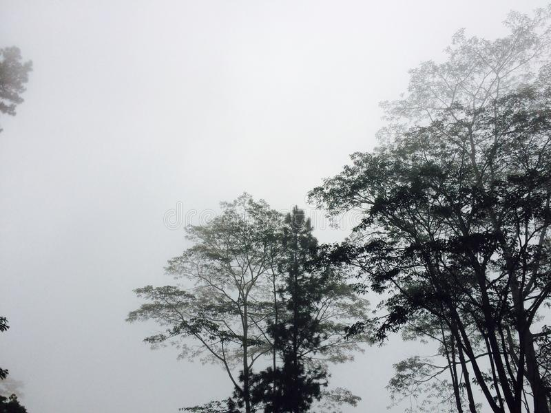 Morning mist in nuwara eliya Sri Lanka royalty free stock photos