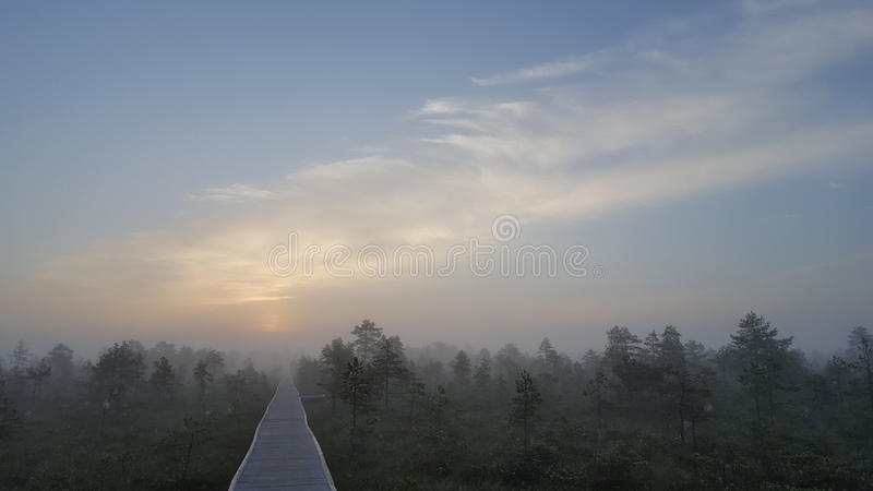 Morning mist royalty free stock image