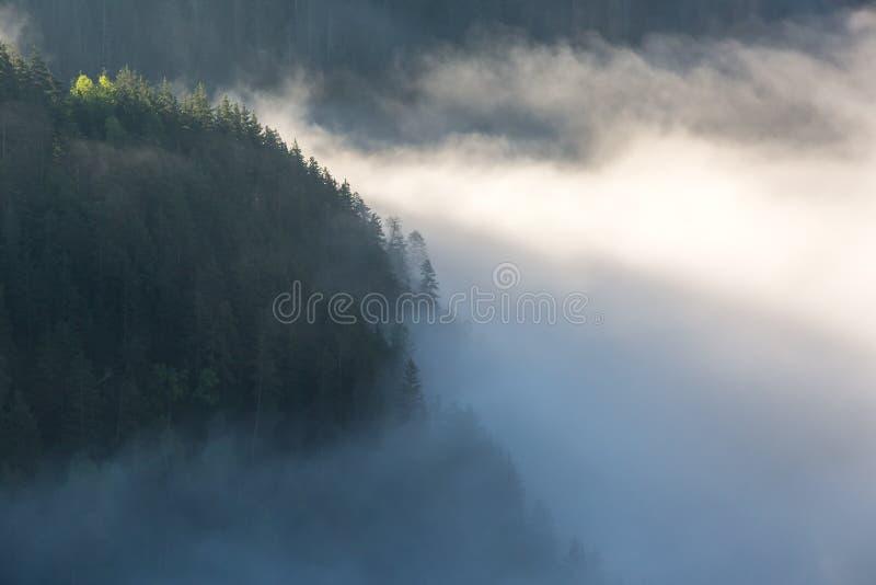 Morning mist op de rivier Fairytale mystical Foggy Forest royalty-vrije stock afbeeldingen